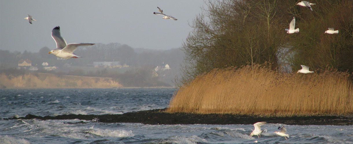 Möwen in der Bucht von Solitüde